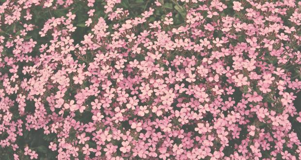 Screen Shot 2015-02-01 at 2.07.42 PM
