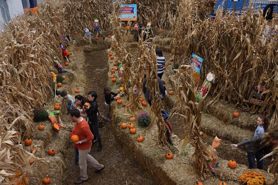 halloween-harvest