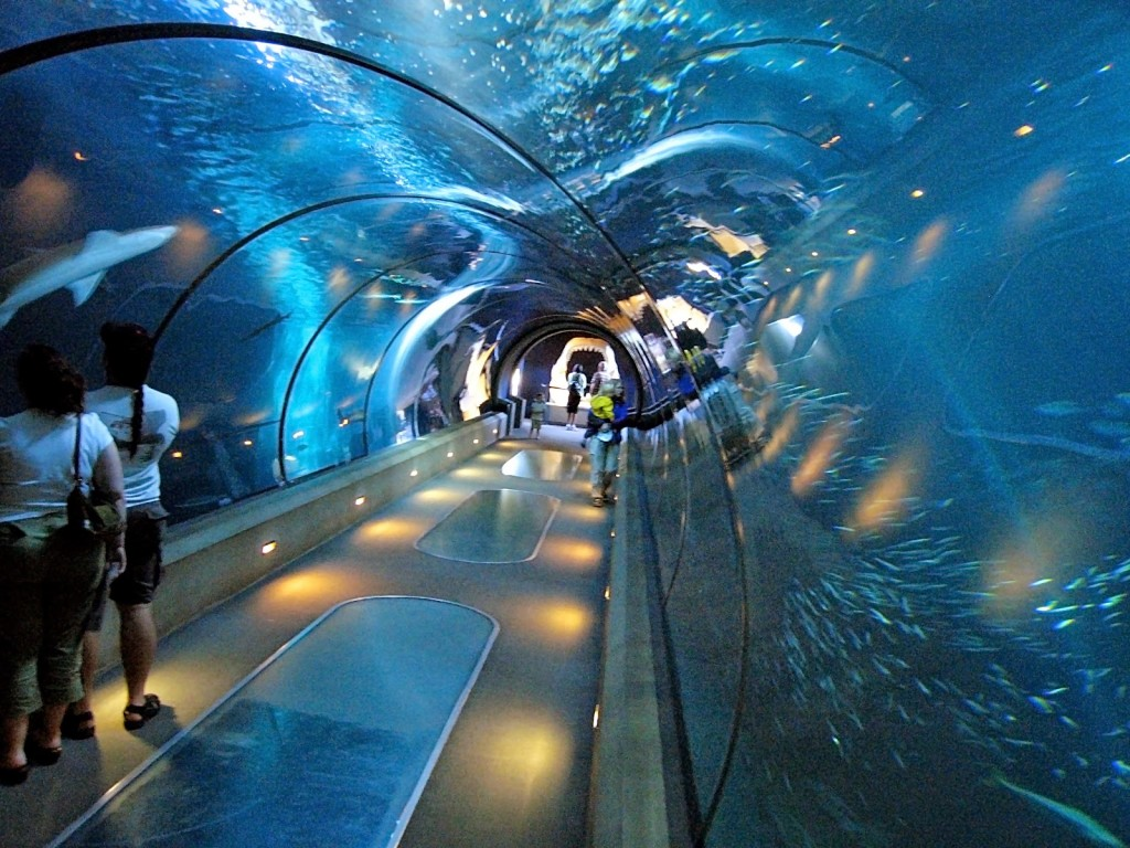 Aquarium-in-New-York-City-New-York