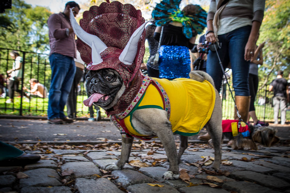 Halloween_dogs_8084